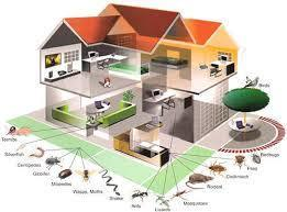 Pest Control Services in Delhi | Pest Control Services Delhi NCR | Scoop.it