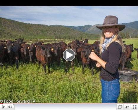 foodconsumer.org - New Half-Hour Series Food Forward TV Premieres September 2014 on PBS | Entomophagy: Edible Insects and the Future of Food | Scoop.it