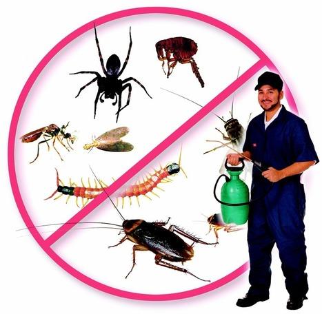 شركة رش مبيدات بالرياض 0503106686 - منتديات المملكة | تنظيف فلل | Scoop.it