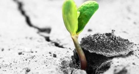 Des start-up freinées par le manque d'investisseurs privés | Entrepreneuriat, Innovation et Création d'Entreprises | Scoop.it
