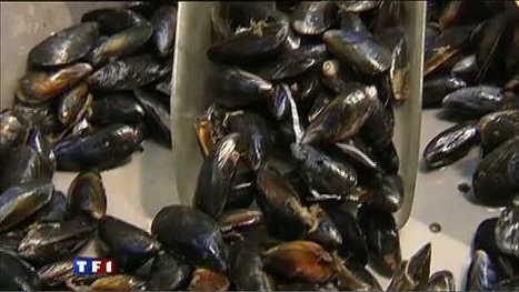 A la braderie de Lille, ils ont mangé 150 millions de fragments de plastiques | Toxique, soyons vigilant ! | Scoop.it