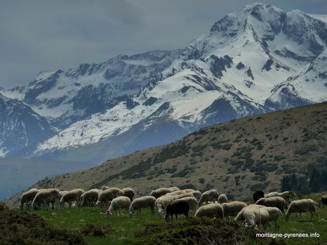 Ascension vers le Plo del Naou - G+ #Pyrénées #pastoralisme | Vallée d'Aure - Pyrénées | Scoop.it
