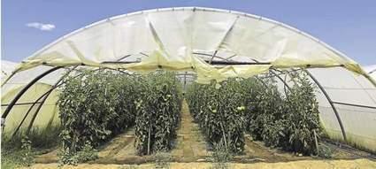 Les producteurs de tomates parient sur l'énergie verte - Les Échos | En route pour la transition énergétique | Scoop.it