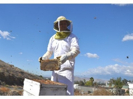 RIVERSIDE: Better regulation sought for commercial bees to save crops | Health from the Hive | Scoop.it