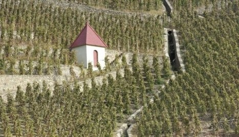Stephane Ogier: Lessons in #Burgundy pay off for northern #Rhone winemaking's rising star | Vitabella Wine Daily Gossip | Scoop.it