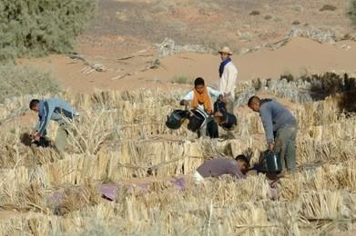 Oasis du Tafilalet, un rempart vert contre le désert | Les déserts dans le monde | Scoop.it