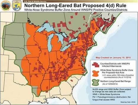 Fungus threatens bats where they sleep - New Jersey Herald | Bat Biology and Ecology | Scoop.it