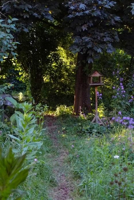 Inventaire entomologique d'un jardin de lotissement en banlieue lyonnaise | Les colocs du jardin | Scoop.it