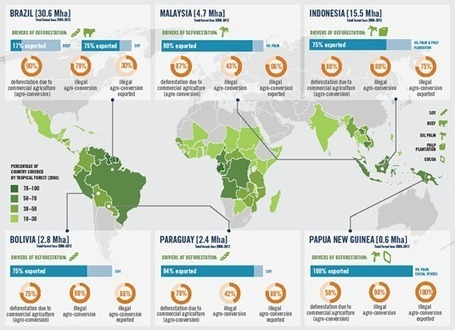 Forest Trends - New Report! Illegal Deforestation | Forests | Scoop.it