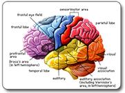 Neuroplasticidad y cambio cognitivo | jhnunez | Scoop.it