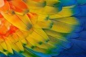 Mademoiselle Grenade - La psychologie des couleurs | Capital-image | Scoop.it