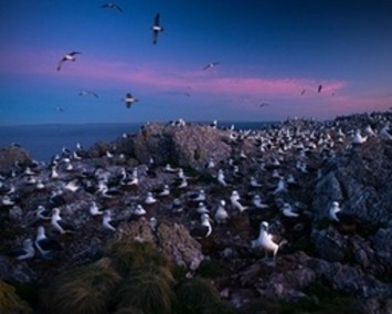 Albatross Island: the remote outcrop where conservation counts – in pictures | Iles | Scoop.it