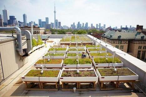 Tweet from @dakwaarde | De mogelijkheden van onze daken | Scoop.it