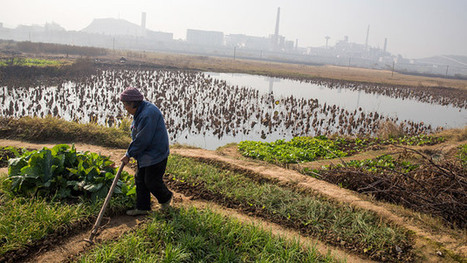 China Aims for Food Security as Pollution Destroys Crop Land | Sustain Our Earth | Scoop.it