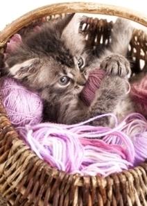 3 Common Reasons for Indoor Cat ER Vet Visits | Pet Health Tips | Scoop.it