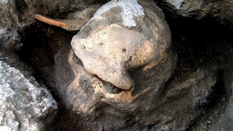 L'histoire de l'évolution de l'homme remise en question - Tribune de Genève   Evolution de l'Homme   Scoop.it