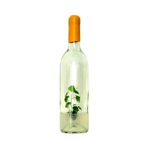 GreenBottle - Pied de vigne en bouteille - Coffret Cadeau Vin | Wineside | Marketing et vin | Scoop.it