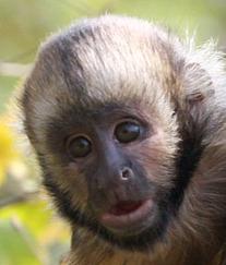Faces et visages de primates en évolution | Aux origines | Scoop.it