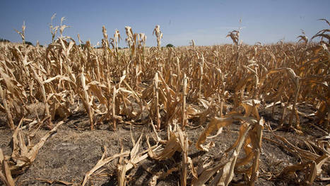 Warming climate sends US corn belt north | Sustain Our Earth | Scoop.it