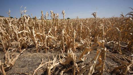 Warming climate sends US corn belt north | Climate Change + Food | Scoop.it