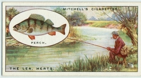 Cigarette Cards: Fishing - Angling (1928) | My Umbrella Cockatoo, TIKI | Scoop.it