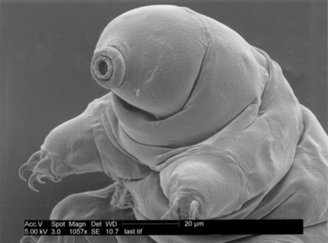 Weird Microscopic Animal Inspires New Kind of Glass | Biomimétisme, Biomimicry, Bioinspired innovation | Scoop.it
