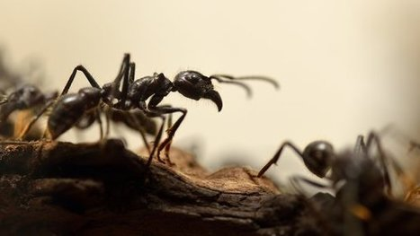 Key to Ants' Evolution May Have Started With a Wasp | All About Ants | Scoop.it