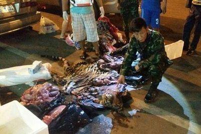 Save the Tiger | Chronique d'un pays où il ne se passe rien... ou presque ! | Scoop.it