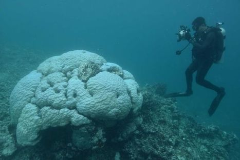 Misrepresentations on the coral bleaching in the Great Barrier Reef | All about water, the oceans, environmental issues | Scoop.it
