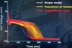 Improving computer modelling of cardiac properties by ditching the one-size-fits-all approach | NC3Rs | Drug Safety | Scoop.it