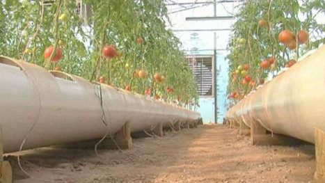 Aquaponic vegetable farm in Texas | Aquaponics in Action | Scoop.it