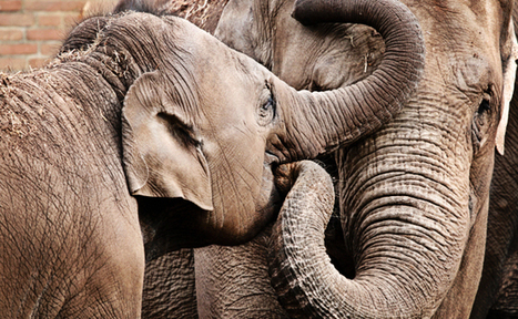 Success! California Bans The Use Of Cruel Bullhooks | Care2 Causes | Anonymiss 68 | Scoop.it