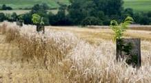 Les sols, le Credo des Bourguignon | Alim'agri | Action publique pour le développement durable des territoires et de l'agriculture | Scoop.it