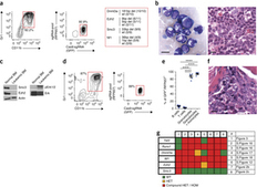 Generation of mouse models of myeloid malignancy with combinatorial genetic lesions using CRISPR-Cas9 genome editing : Nature Biotechnology : Nature Publishing Group | Single cell genomics and transcriptomics | Scoop.it