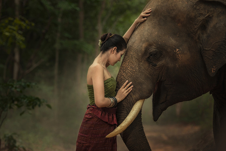 Closeup portrait of a beautiful girl with elephant.   Beautiful Photography   Scoop.it
