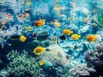 Océanopolis, le Parc de découverte des océans à Brest | LA #BRETAGNE, ELLE VOUS CHARME - @Socialfave @TheMisterFavor @TOOLS_BOX_DEV @TOOLS_BOX_EUR @P_TREBAUL @DNAMktg @DNADatas @BRETAGNE_CHARME @TOOLS_BOX_IND @TOOLS_BOX_ITA @TOOLS_BOX_UK @TOOLS_BOX_ESP @TOOLS_BOX_GER @TOOLS_BOX_DEV @TOOLS_BOX_BRA | Scoop.it