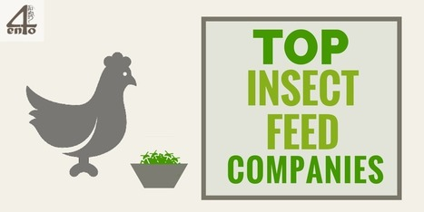 Top 10 Insect Feed Companies - 4ento | Protein Alternatives: Insects as Mini-Livestock | Scoop.it