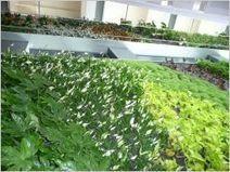 Paris, terrain d'expérimentation pour la végétalisation innovante | biodiversité en milieu urbain | Scoop.it