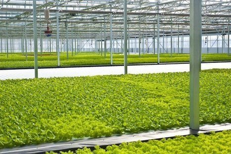 With 3 Million Heads of Lettuce, Cleveland Hydroponics Operation Revitalizes Low Income Area | Yellow Boat Social Entrepreneurism | Scoop.it