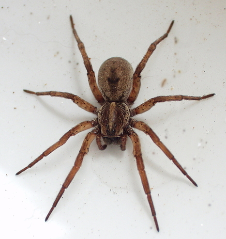 Horrifying Spiders to Ever Crawl the Earth | Health | Scoop.it