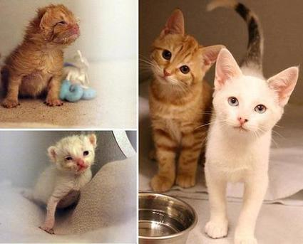 Look at what two months in foster care can do! Tweet from @LoveMeowdotcom | Cats' behavior and maintenance. | Scoop.it