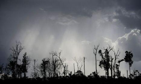 Un experimento para salvar los bosques latinoamericanos, hecho de madera | 3 evaluación | Scoop.it