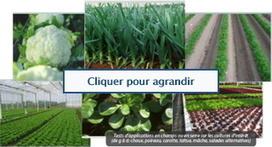 Des biopesticides pour remplacer les pesticides | Qualité Agro-agri | Scoop.it