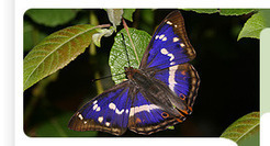 The State of Britain's Butterflies - Butterfly Conservation | 100 Acre Wood | Scoop.it