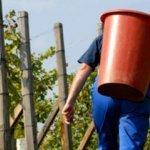 En 2012 les vendanges devraient être moins abondantes et plus tardives   Vins nature, Vin de plaisir   Scoop.it