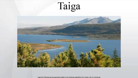 Taiga - Wiki Article | Taiga- Boreal Forest Biome | Scoop.it