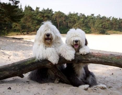 TECHNOLOGY: Colton entrepreneur invents apps for dog breeds - Press-Enterprise (blog) | Dog Lovers | Scoop.it