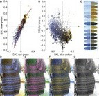 Asymmetries in blue–yellow color perception and in the color of 'the dress': Current Biology   Bounded Rationality and Beyond   Scoop.it