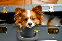 Taking Your Pets on Holidays with You - Love That Pet | Travel | Scoop.it