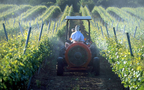 'First ever' criminal investigation in France into wine grower's death from pesticide use | Food issues | Scoop.it